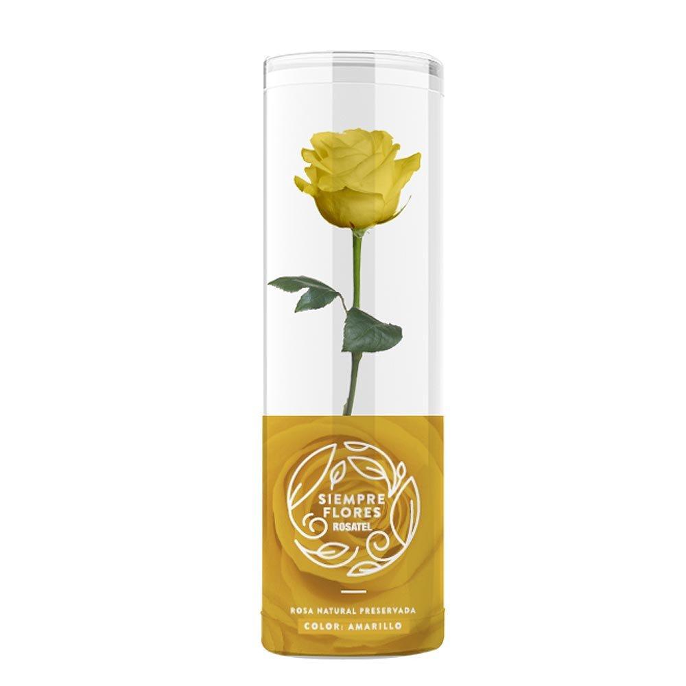 Rosa Preservada Short 100% Natural Rosatel
