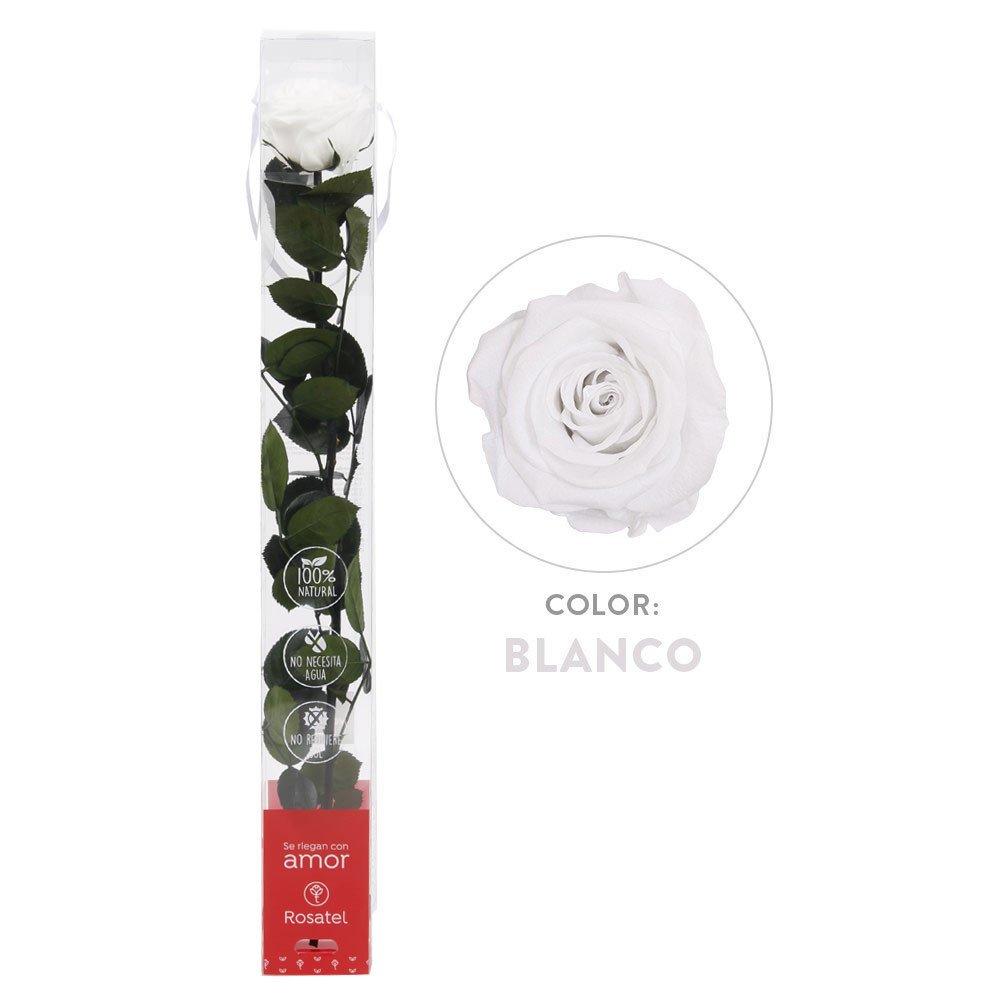 Rosa Blanca Preservada 100% Natural Rosatel