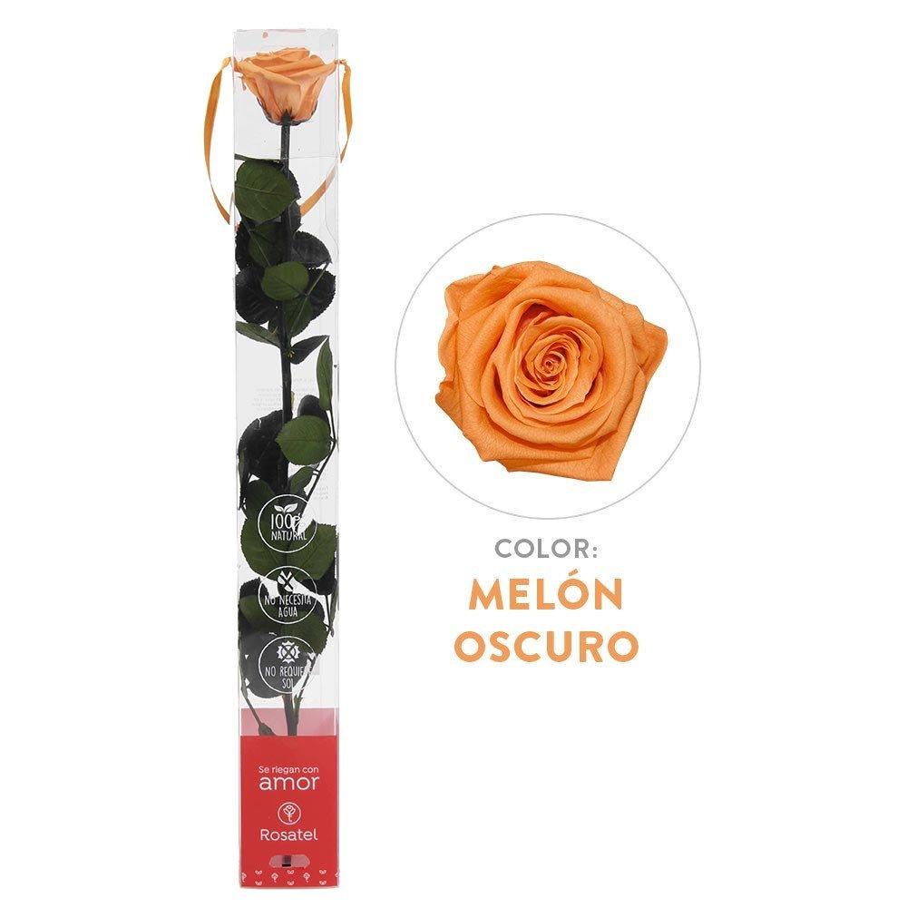 Rosa Melón Oscuro Preservada 100% Natural Rosatel