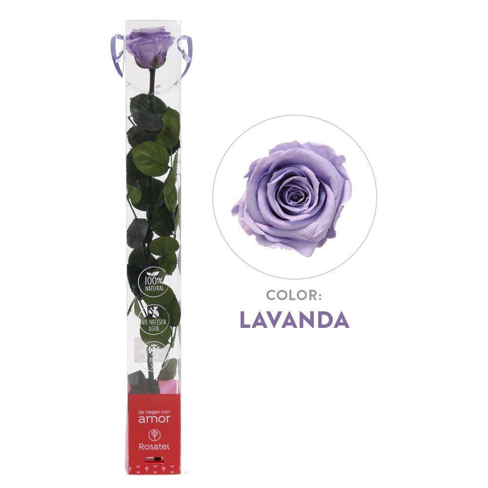 Rosa Lavanda Preservada 100% Natural Rosatel