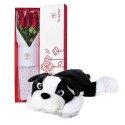 Caja Blanca con 6 Rosas y Perro Tarapoto XL Rosatel