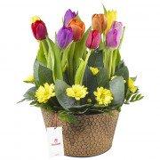 Arreglo con 10 Tulipanes en Base Hojalata