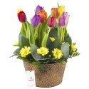 Arreglo con 10 Tulipanes en Base Hojalata Rosatel