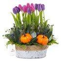 Arreglo con tulipanes lilas y calabazas Rosatel