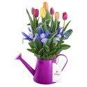 Regadera Fucsia con 8 Tulipanes