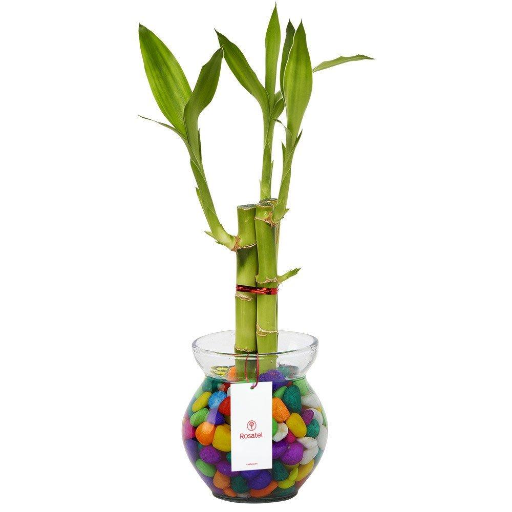 Base de vidrio con 3 varas de Bambú