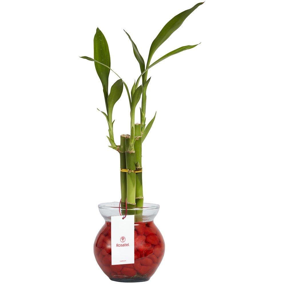 Base vidrio con 3 varas de bamboo