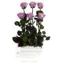 Base Blanca con 6 Rosas Preservadas