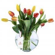 Base de vidrio con 12 Tulipanes