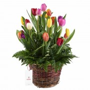 Canasta con 20 Tulipanes y Follaje